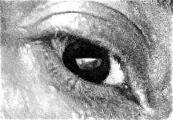 antoine-eye